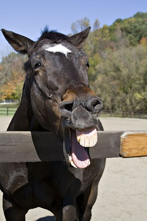 laughinghorse